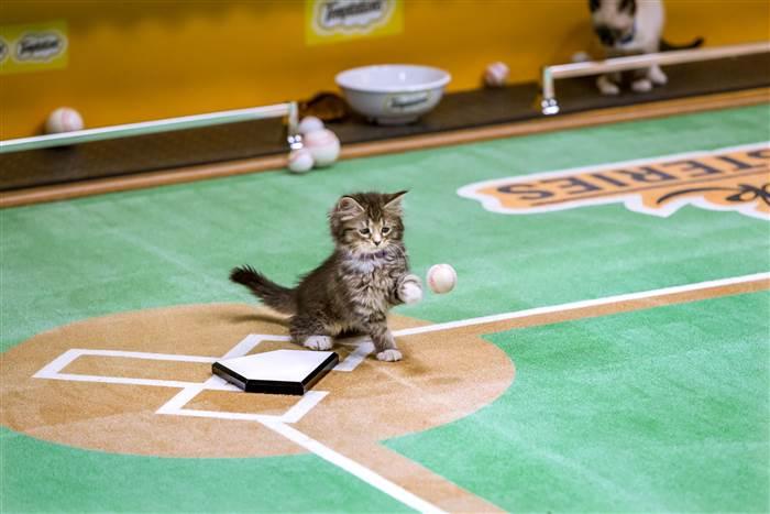 Name:  kitten baseball.jpg Views: 391 Size:  39.0 KB