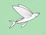 Name:  funafuti flying fish.png Views: 198 Size:  17.0 KB